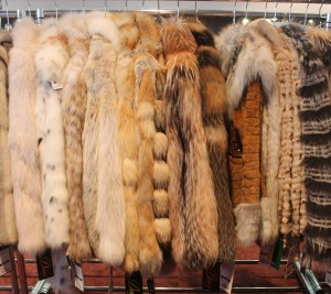 From Short To Long Fur Is The Warmest Thing In The
