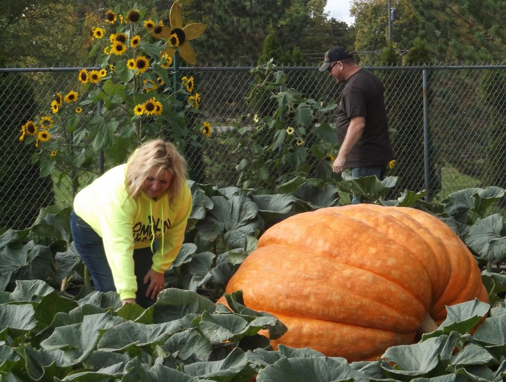 Todd and Dawn Cotterman spend hours tending the pumpkin, which grew by up to 35 pounds a day. PHOTO/MATTHEW E. SEMRAU