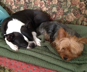 Some pets get lethargic in the winter, their owners say. PHOTO/JONATHAN JACKSON