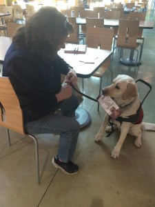 Lori Grigg teaches Colt, a service dog in training, how to retrieve dropped items. PHOTO/PAIGE BROCKWAY