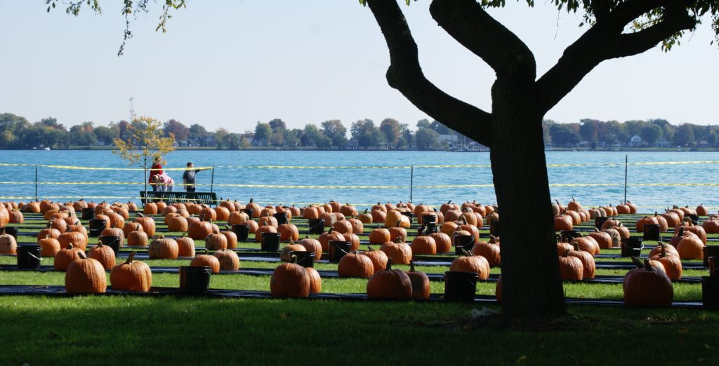 A warm, sunny day brought larger than expected turnout, with more than 100 same-day registrations for the pumpkin carving. PHOTO/COLLEEN KOWALEWSKI